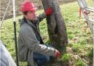 Kako saniramo poškodbe dreves