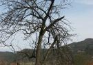 Drevo je visoko in poškodovano
