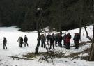 obrezovanje-jablan-bukovnik-ljubno023